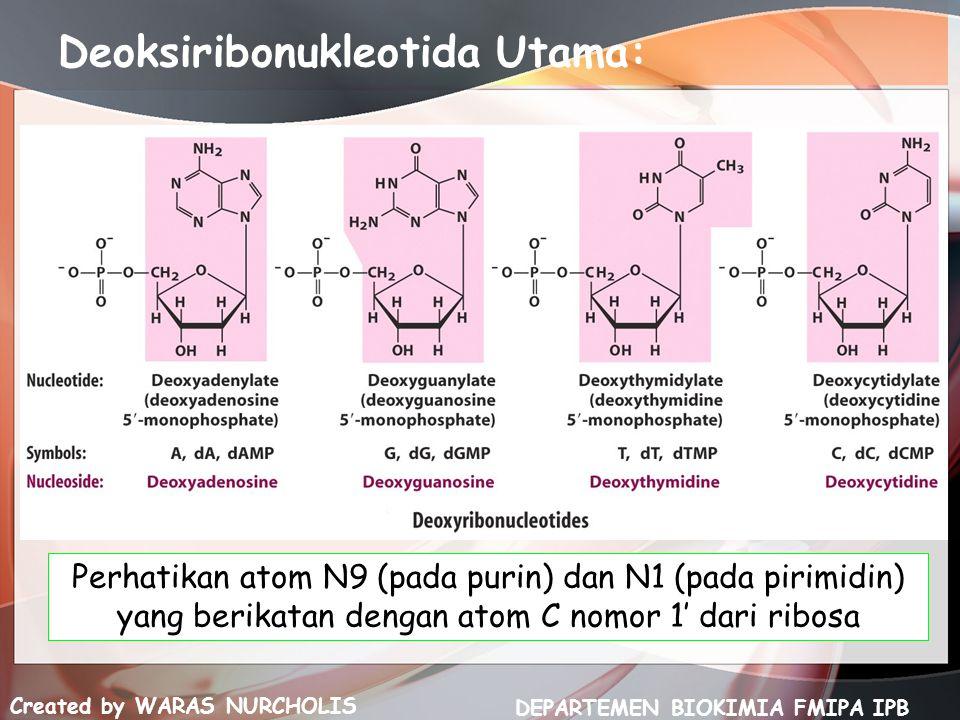 Deoksiribonukleotida Utama: