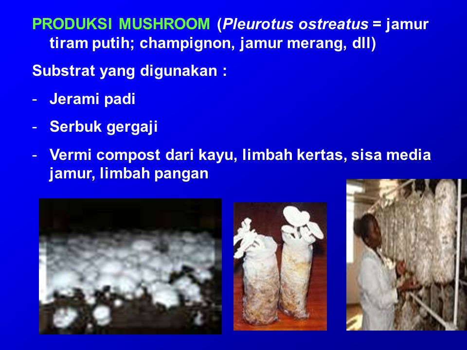 PRODUKSI MUSHROOM (Pleurotus ostreatus = jamur tiram putih; champignon, jamur merang, dll)