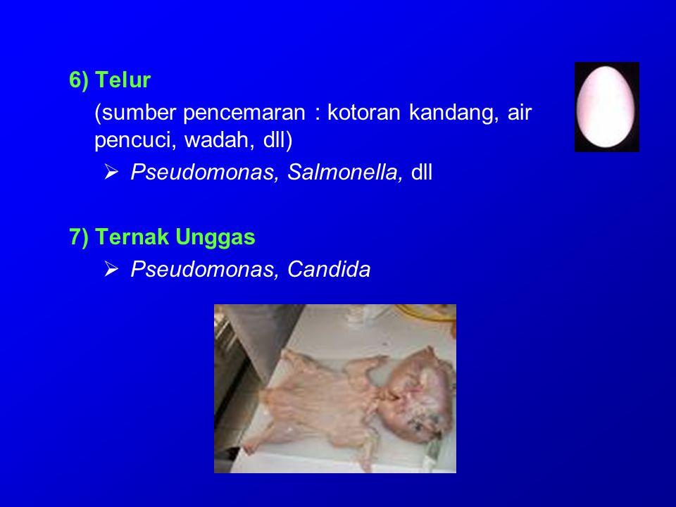 6) Telur (sumber pencemaran : kotoran kandang, air pencuci, wadah, dll) Pseudomonas, Salmonella, dll.