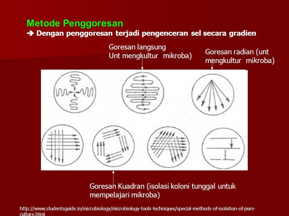 Metode Penggoresan  Dengan penggoresan terjadi pengenceran sel secara gradien. Goresan langsung. Unt mengkultur mikroba)