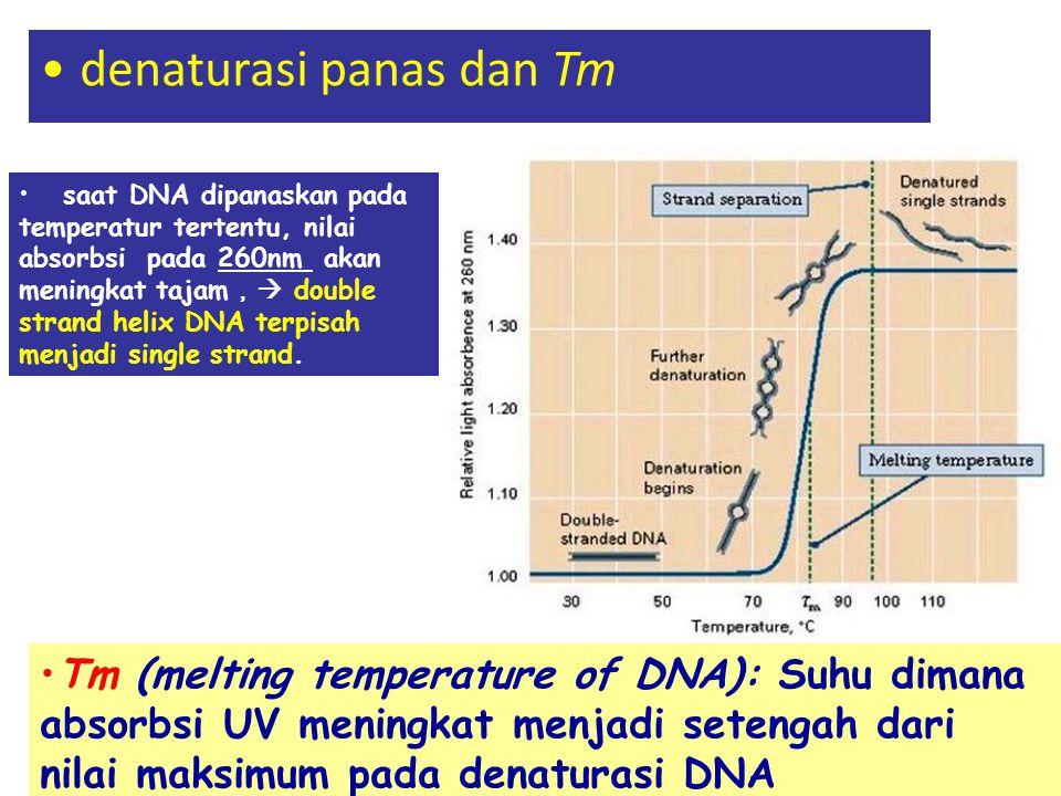 denaturasi panas dan Tm