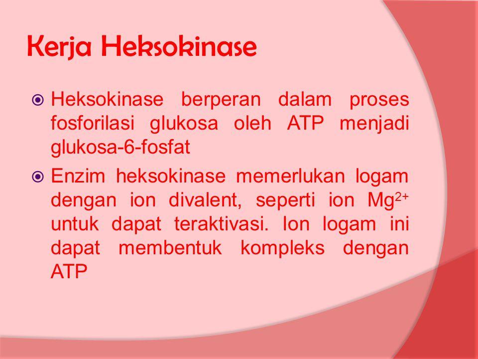 Kerja Heksokinase Heksokinase berperan dalam proses fosforilasi glukosa oleh ATP menjadi glukosa-6-fosfat.