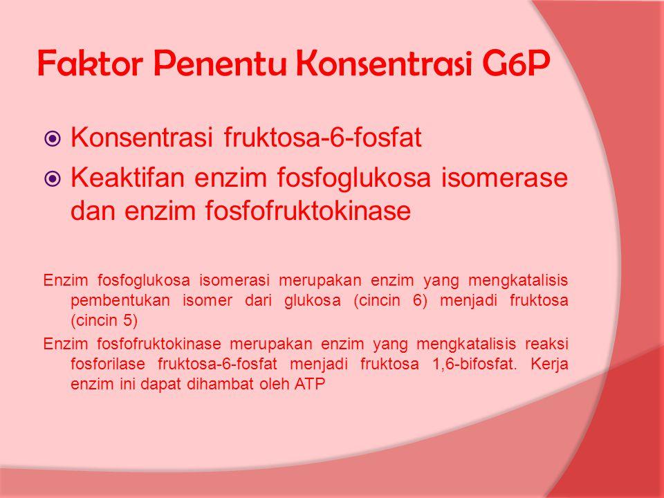 Faktor Penentu Konsentrasi G6P