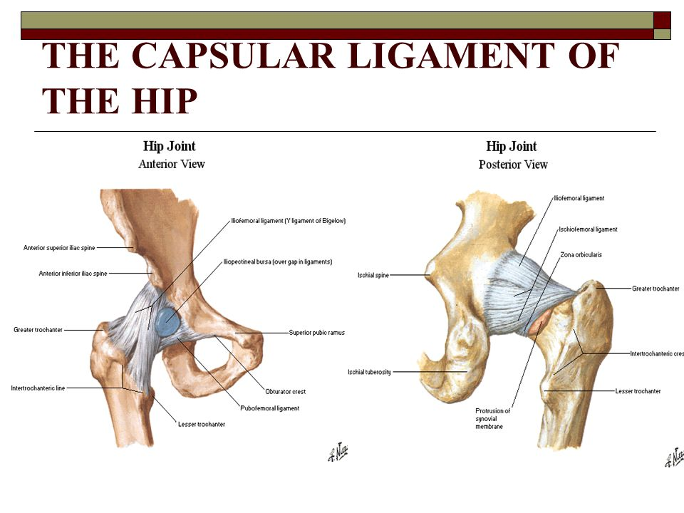 THE CAPSULAR LIGAMENT OF THE HIP