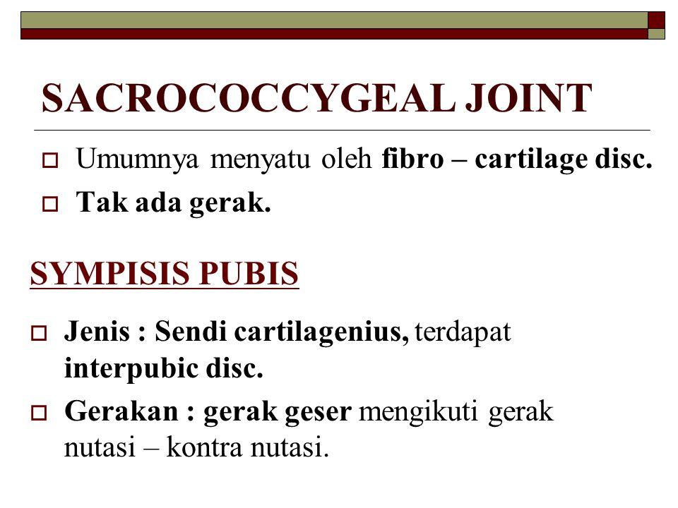 SACROCOCCYGEAL JOINT SYMPISIS PUBIS