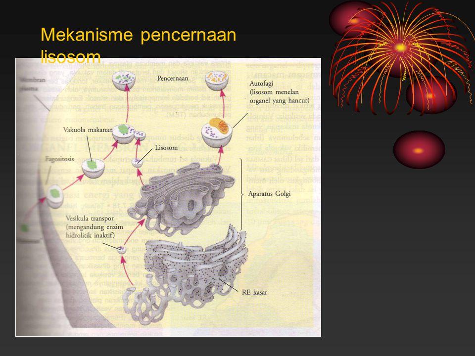 Mekanisme pencernaan lisosom