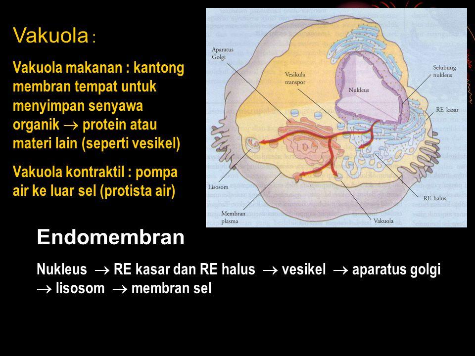 Vakuola : Vakuola makanan : kantong membran tempat untuk menyimpan senyawa organik  protein atau materi lain (seperti vesikel)