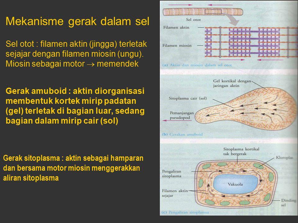 Mekanisme gerak dalam sel