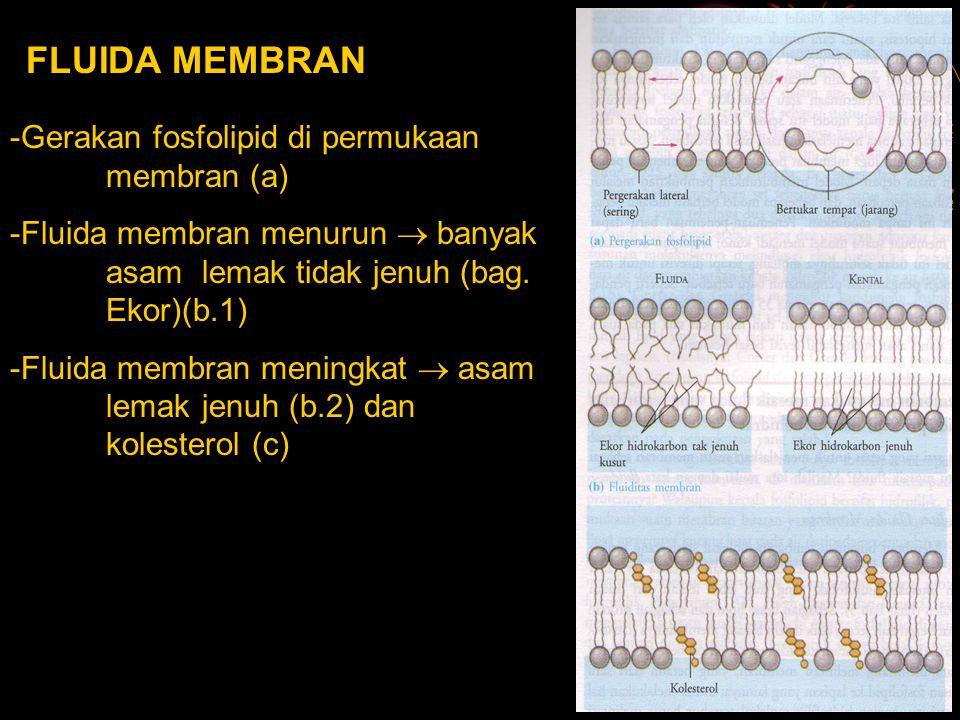 FLUIDA MEMBRAN Gerakan fosfolipid di permukaan membran (a)