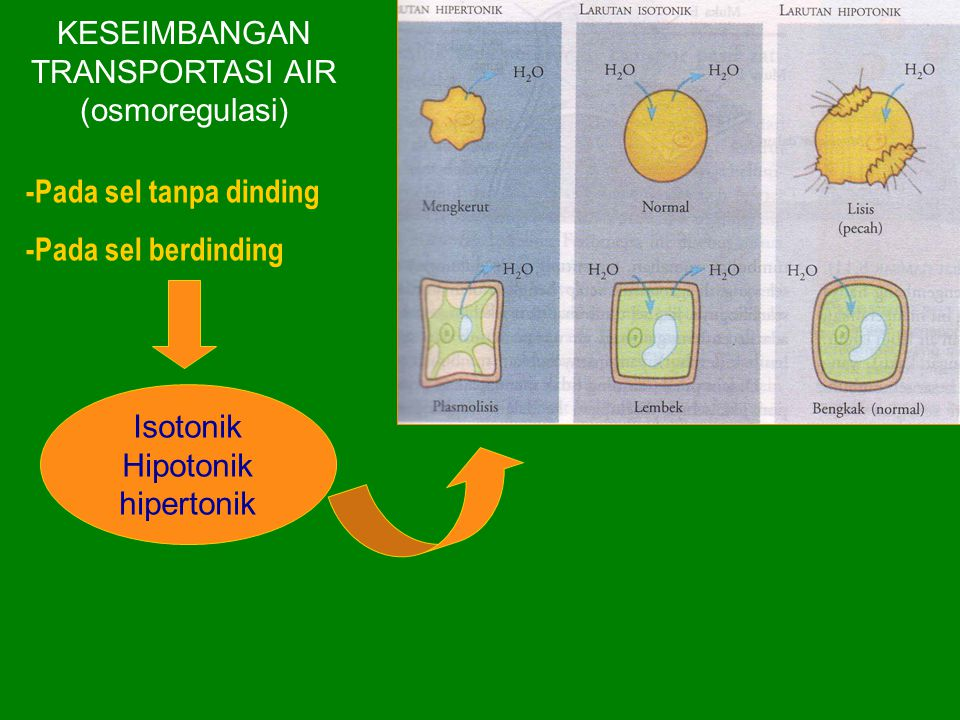 KESEIMBANGAN TRANSPORTASI AIR (osmoregulasi)