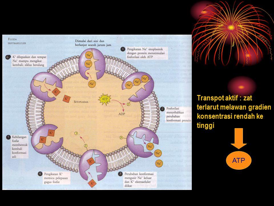 Transpot aktif : zat terlarut melawan gradien konsentrasi rendah ke tinggi