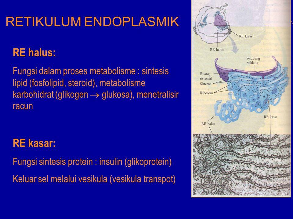 RETIKULUM ENDOPLASMIK