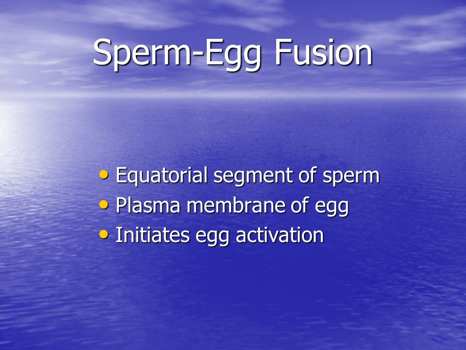 Sperm-Egg Fusion Equatorial segment of sperm Plasma membrane of egg