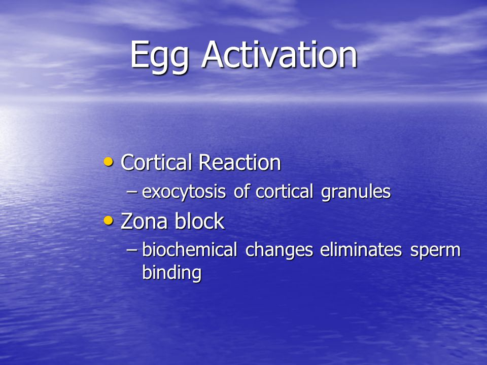 Egg Activation Cortical Reaction Zona block