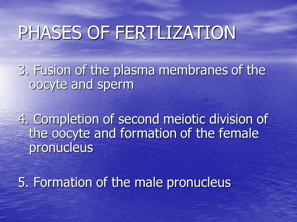 PHASES OF FERTLIZATION