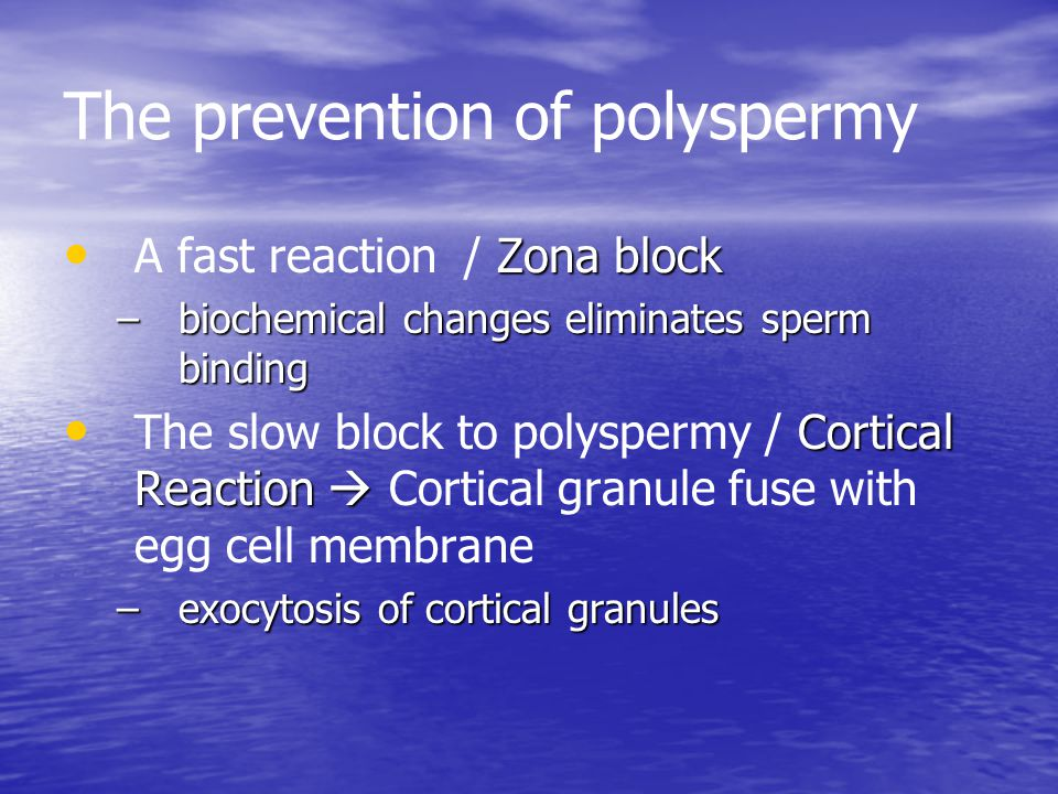The prevention of polyspermy