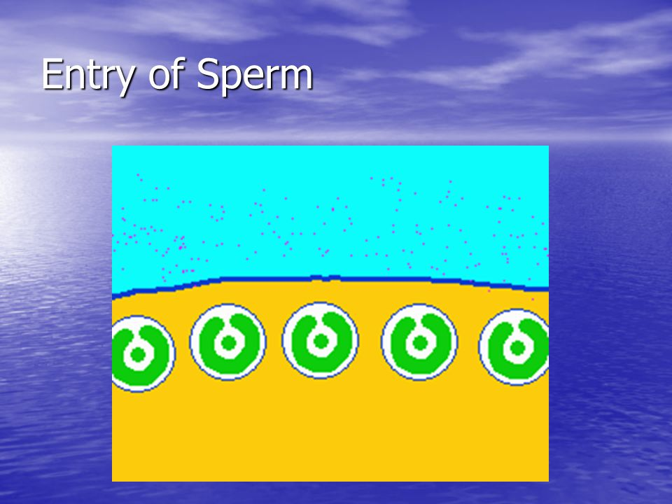 Entry of Sperm