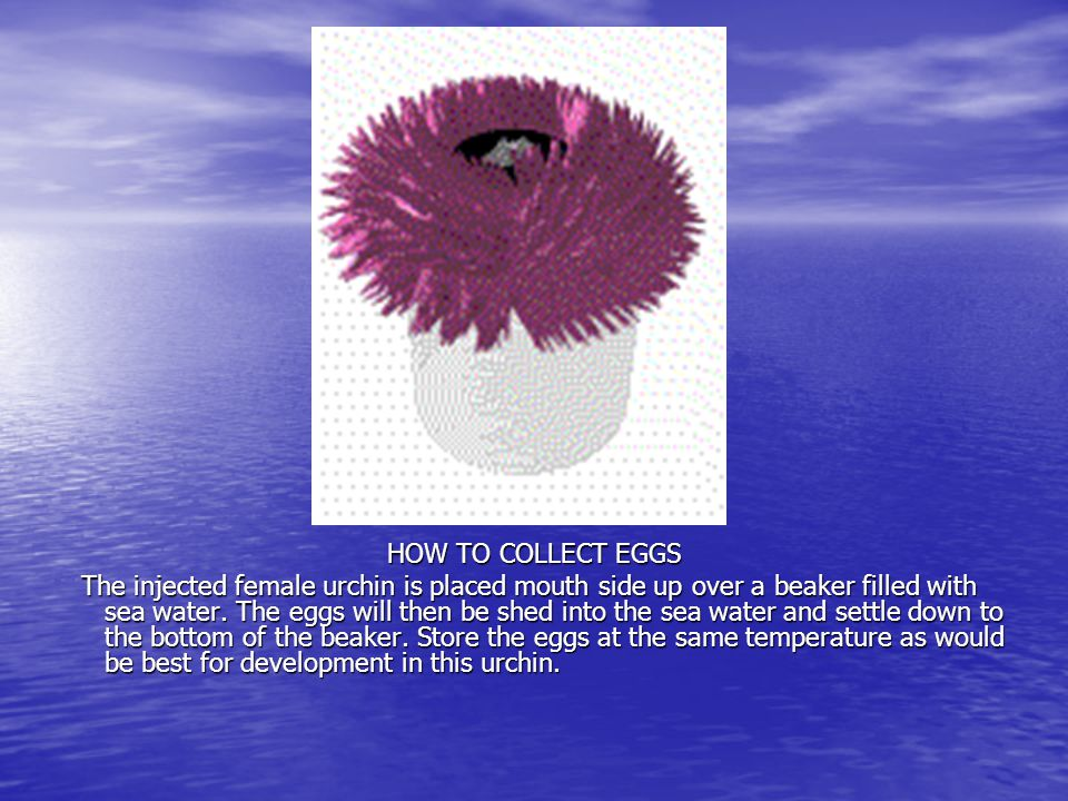 HOW TO COLLECT EGGS