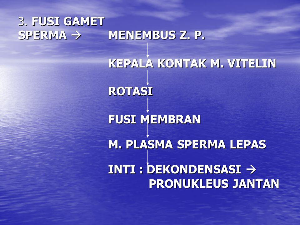 3. FUSI GAMET SPERMA  MENEMBUS Z. P. KEPALA KONTAK M. VITELIN. ROTASI. FUSI MEMBRAN. M. PLASMA SPERMA LEPAS.