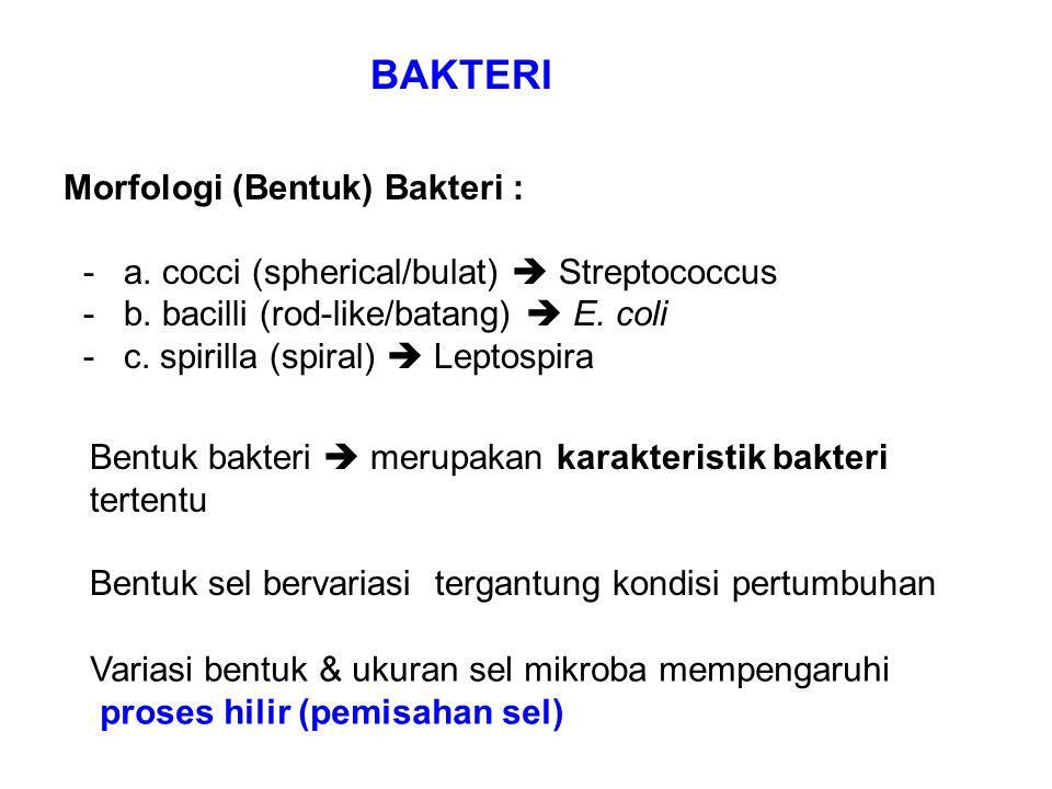 BAKTERI Morfologi (Bentuk) Bakteri :