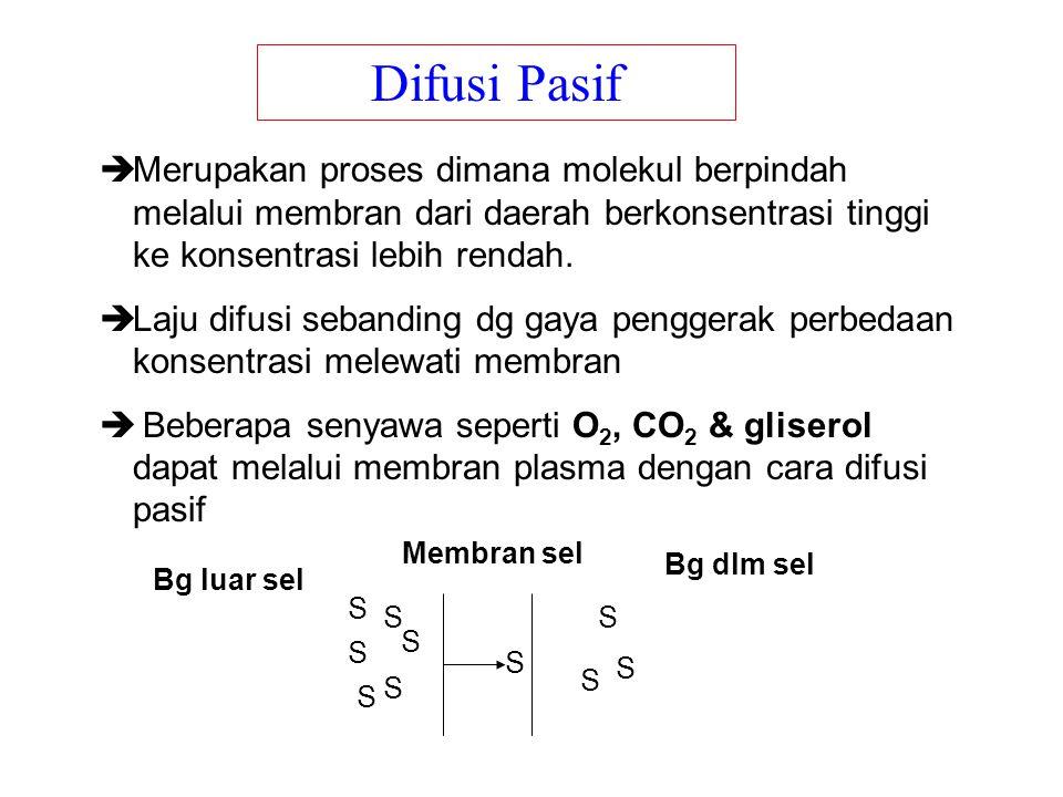Difusi Pasif Merupakan proses dimana molekul berpindah melalui membran dari daerah berkonsentrasi tinggi ke konsentrasi lebih rendah.