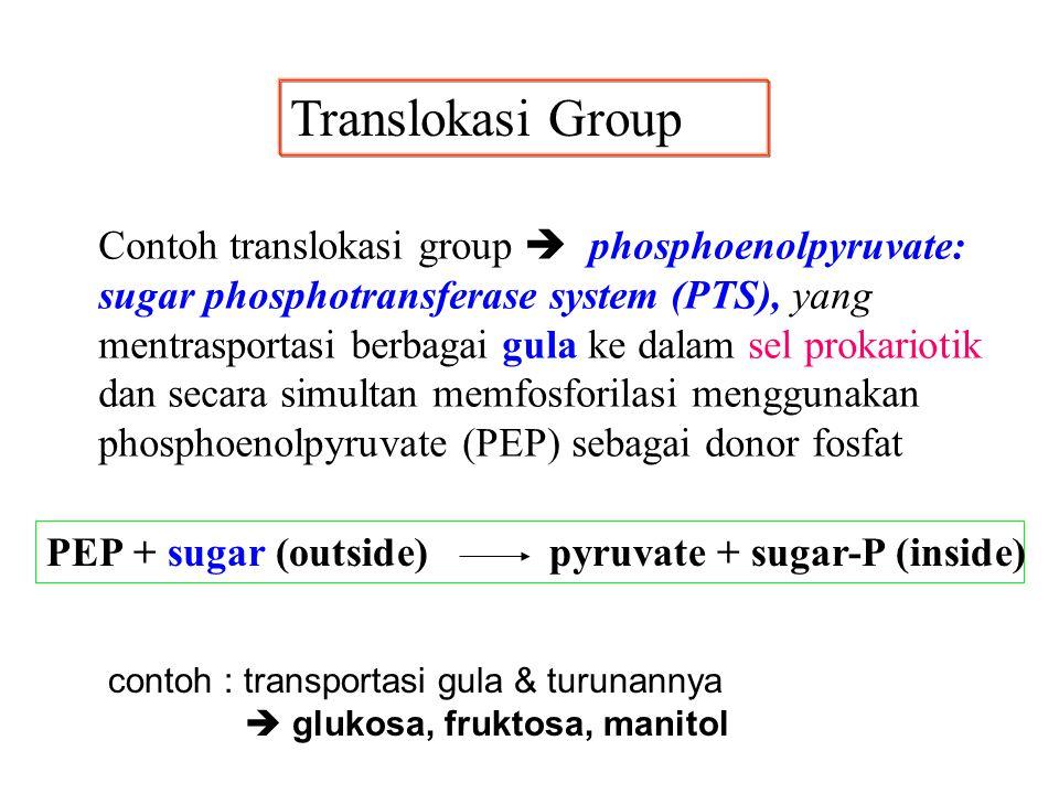Translokasi Group