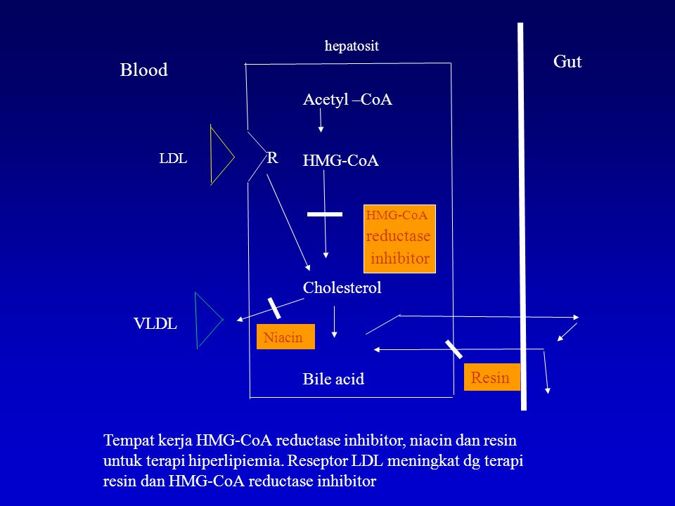 Gut Blood Acetyl –CoA HMG-CoA R reductase inhibitor Cholesterol