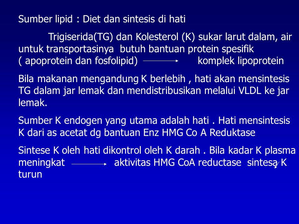 Sumber lipid : Diet dan sintesis di hati