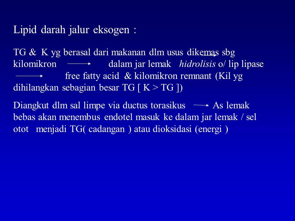 Lipid darah jalur eksogen :