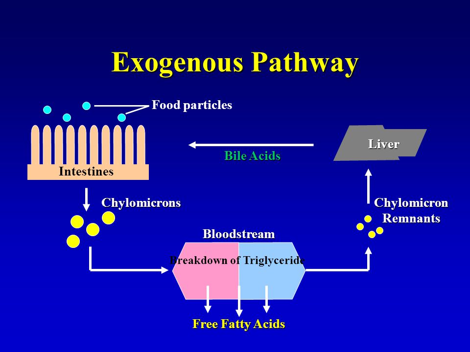 Breakdown of Triglyceride