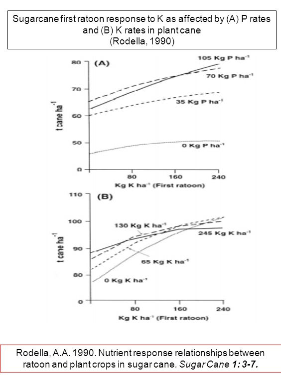 Sugarcane first ratoon response to K as affected by (A) P rates and (B) K rates in plant cane