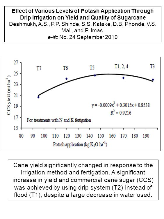 Effect of Various Levels of Potash Application Through Drip Irrigation on Yield and Quality of Sugarcane