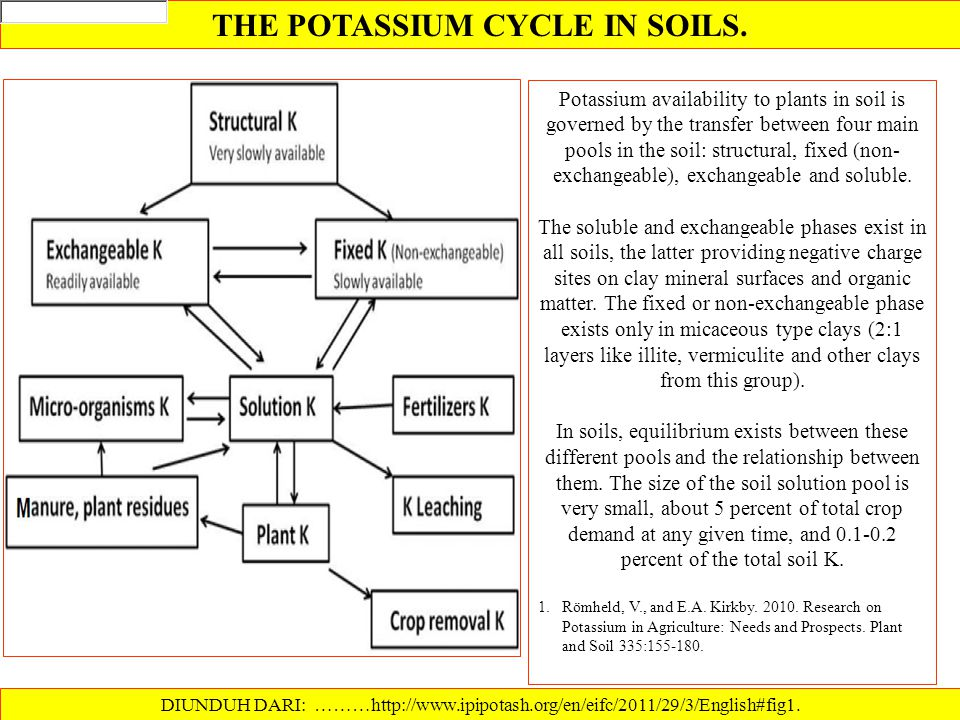 THE POTASSIUM CYCLE IN SOILS.