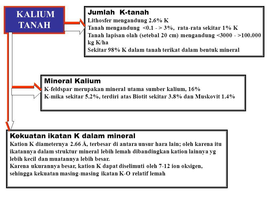 KALIUM TANAH Jumlah K-tanah Mineral Kalium