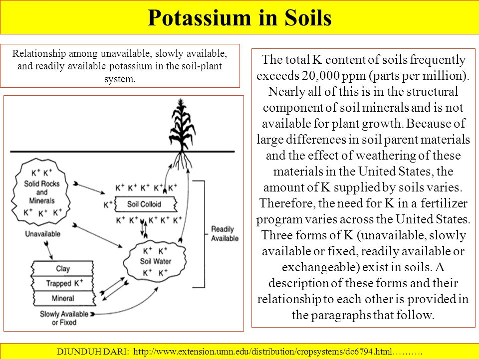 Potassium in Soils Relationship among unavailable, slowly available, and readily available potassium in the soil-plant system.