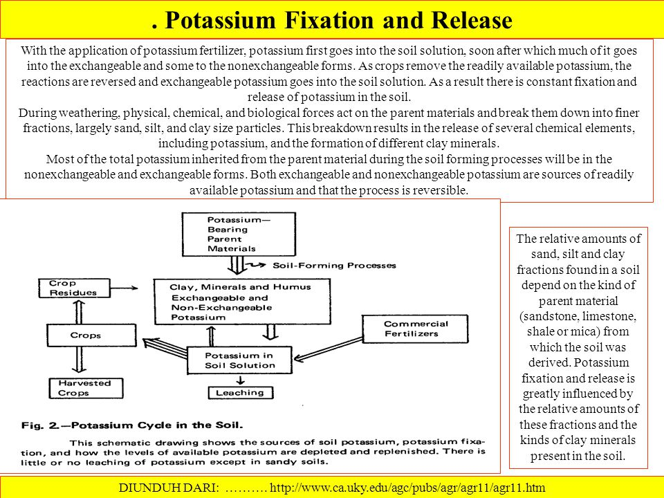 . Potassium Fixation and Release