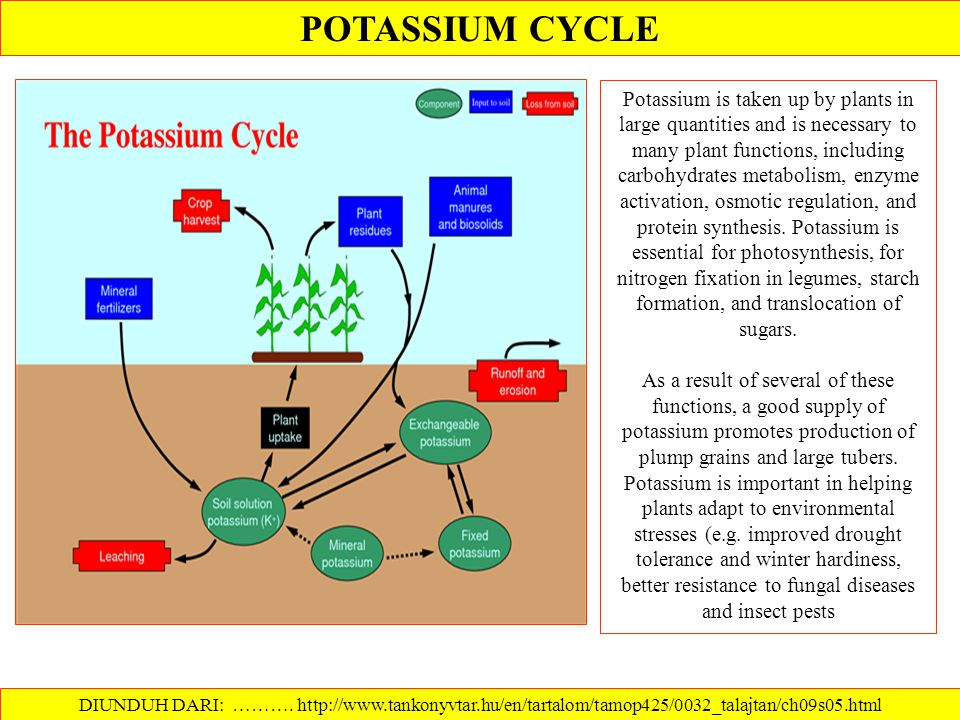 POTASSIUM CYCLE