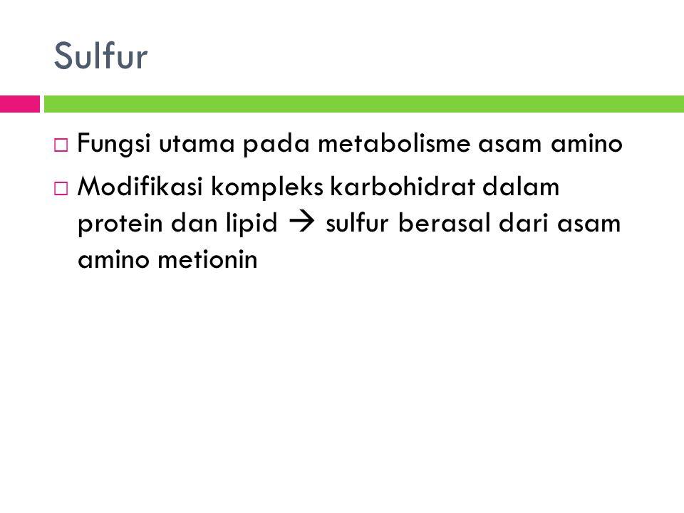 Sulfur Fungsi utama pada metabolisme asam amino