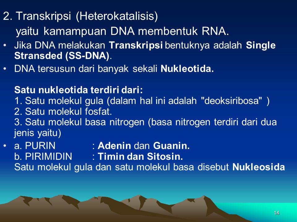 2. Transkripsi (Heterokatalisis) yaitu kamampuan DNA membentuk RNA.