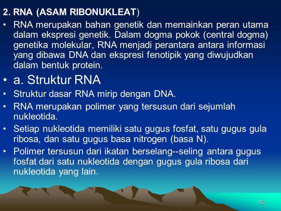 a. Struktur RNA 2. RNA (ASAM RIBONUKLEAT)