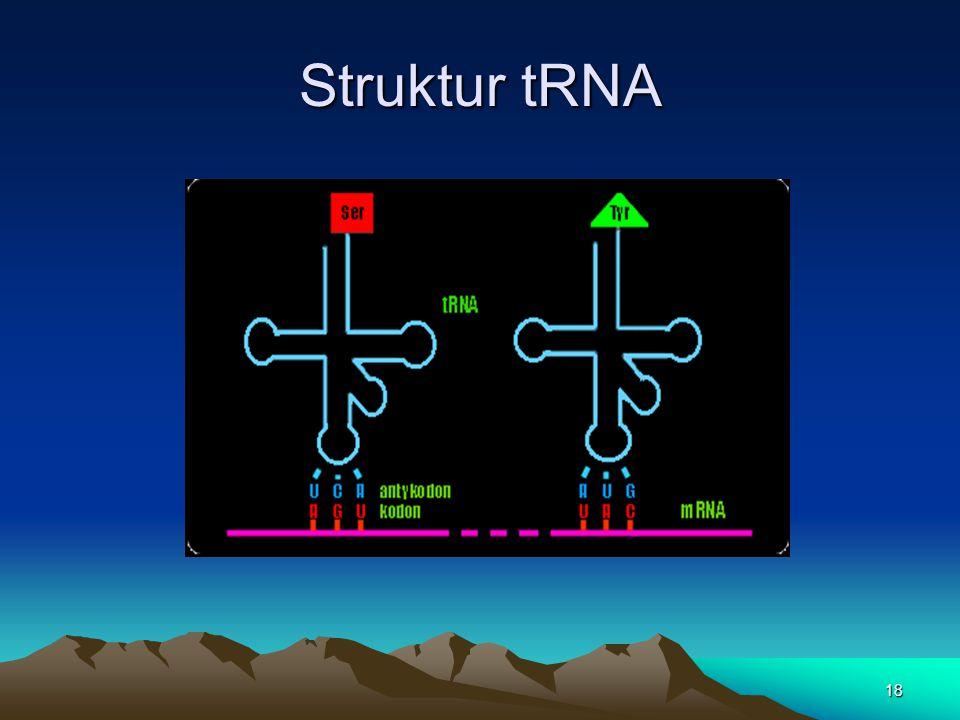 Struktur tRNA