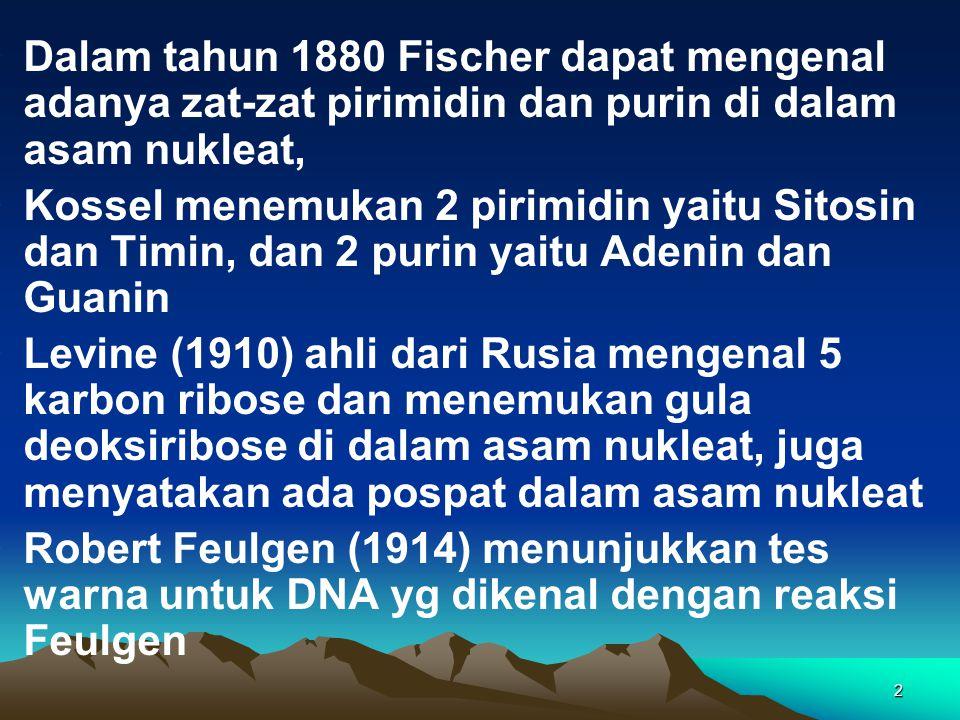 Dalam tahun 1880 Fischer dapat mengenal adanya zat-zat pirimidin dan purin di dalam asam nukleat,