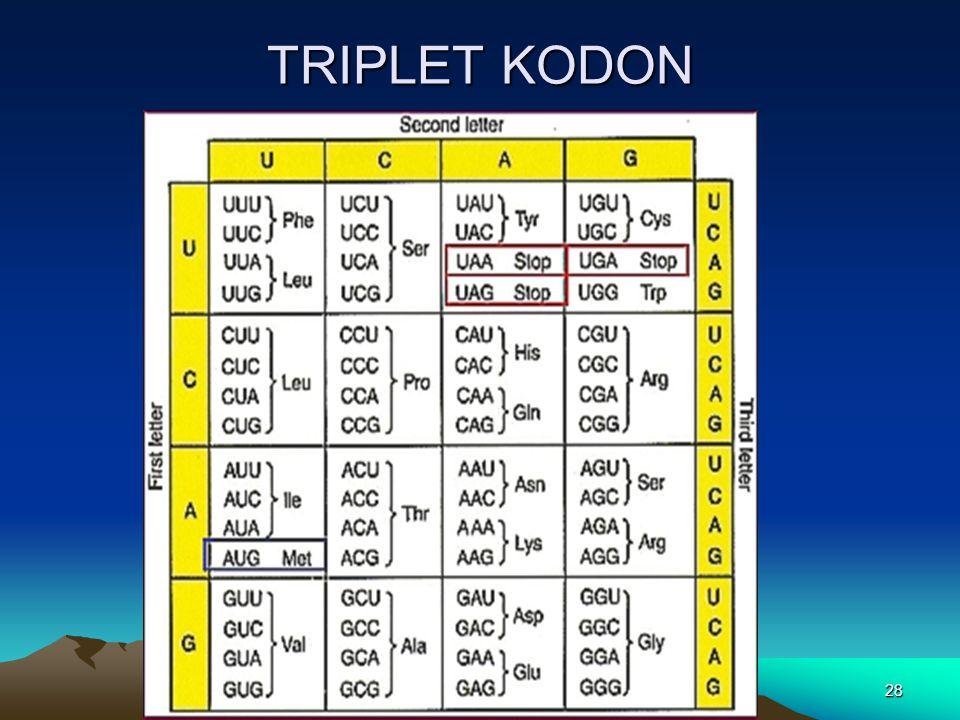 TRIPLET KODON
