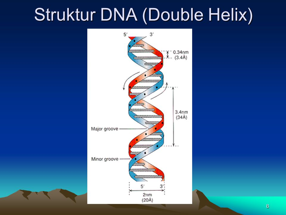 Struktur DNA (Double Helix)