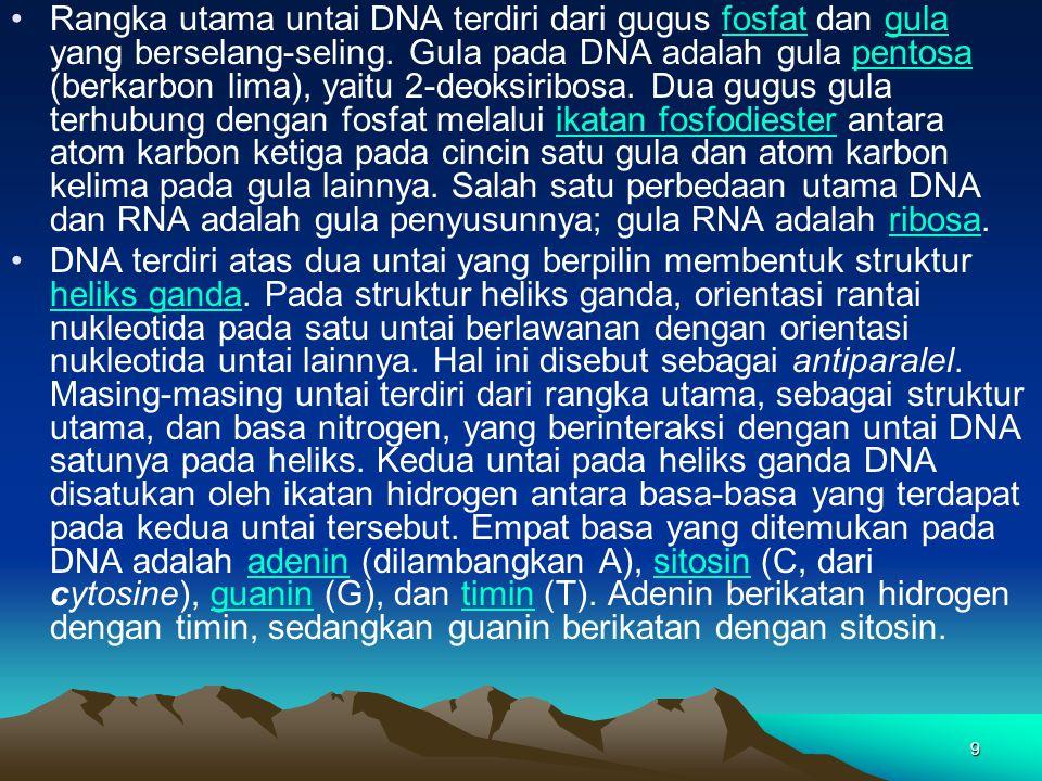 Rangka utama untai DNA terdiri dari gugus fosfat dan gula yang berselang-seling. Gula pada DNA adalah gula pentosa (berkarbon lima), yaitu 2-deoksiribosa. Dua gugus gula terhubung dengan fosfat melalui ikatan fosfodiester antara atom karbon ketiga pada cincin satu gula dan atom karbon kelima pada gula lainnya. Salah satu perbedaan utama DNA dan RNA adalah gula penyusunnya; gula RNA adalah ribosa.