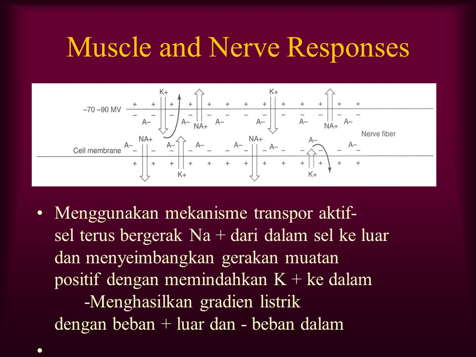 Muscle and Nerve Responses
