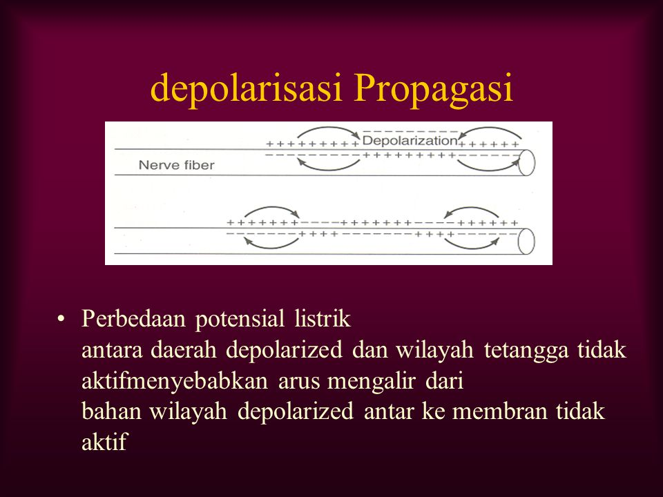 depolarisasi Propagasi