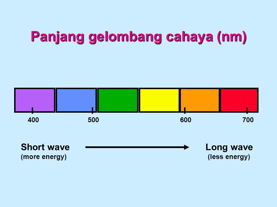 Panjang gelombang cahaya (nm)