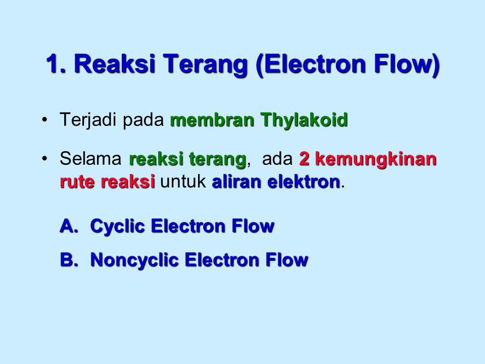 1. Reaksi Terang (Electron Flow)