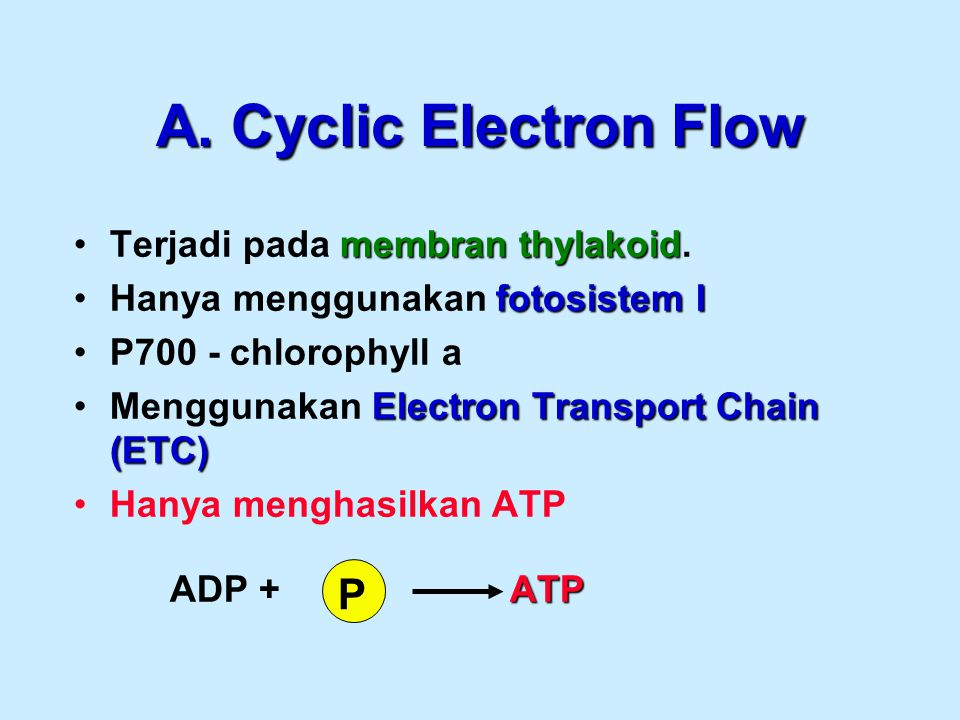A. Cyclic Electron Flow P Terjadi pada membran thylakoid.